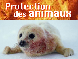 Protection des animaux